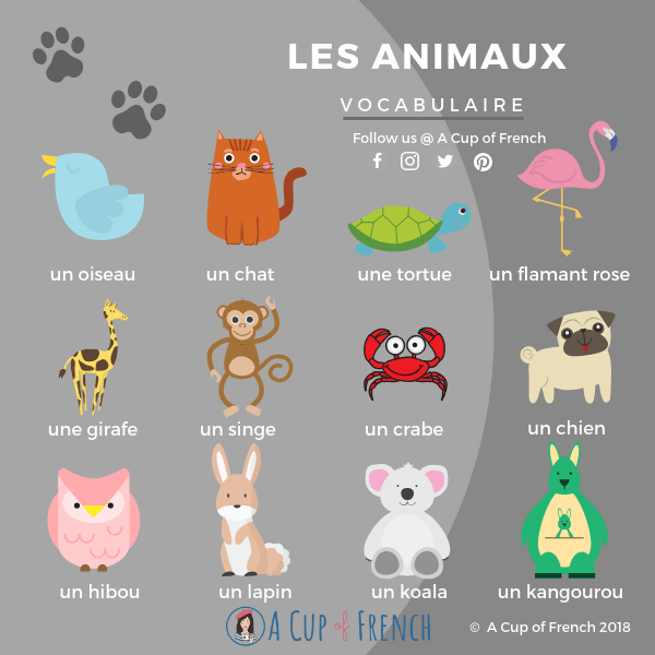 Animals French words 1