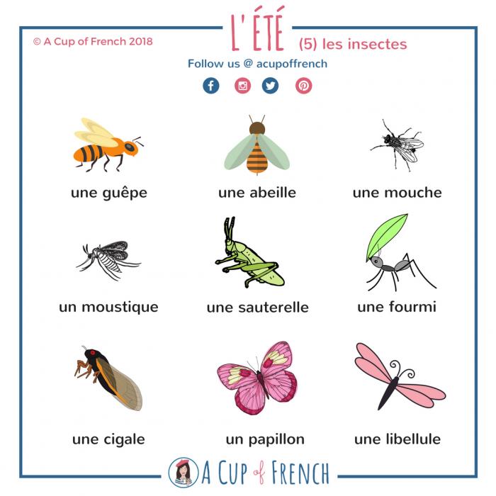 L'été - insectes