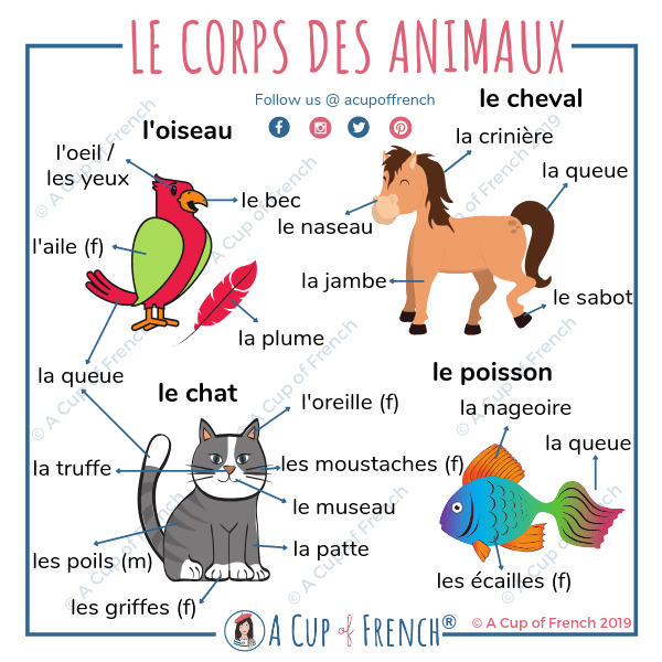 Body parts of the animals in French