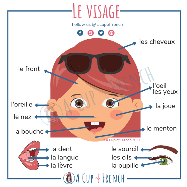 The different parts of the face in French
