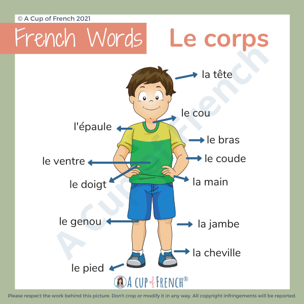 Parts of the body in French