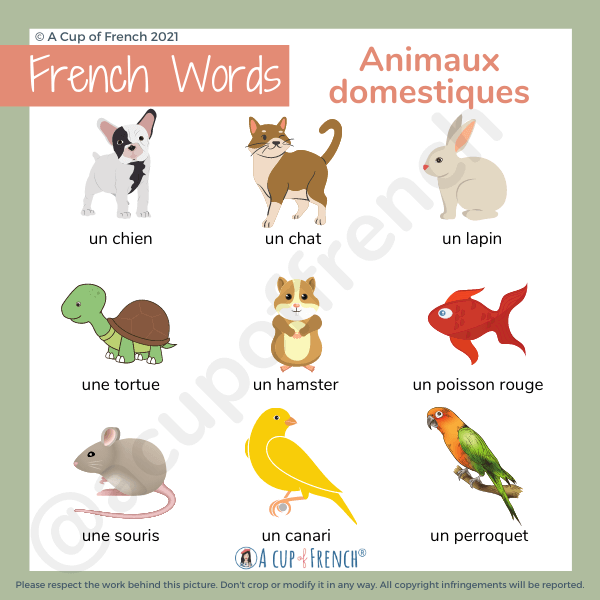 Animals in French 1