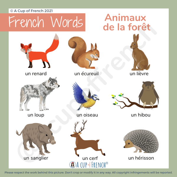 Animals in French 3