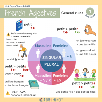 French adjectives - gender and numbers - beginner