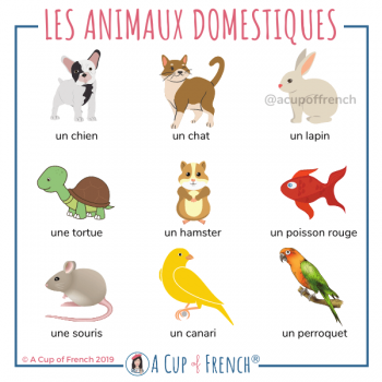 Animals in French - 2