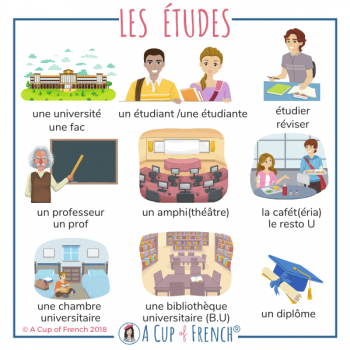 Studies - French words
